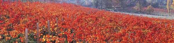Umbria Wine Tours - Cantine Montefalco