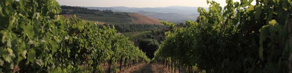 Umbria Wine Tours - cantine Orvieto Amerini