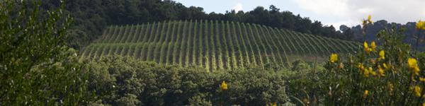 Umbria Wine Tours - cantine Spoleto Valnerina