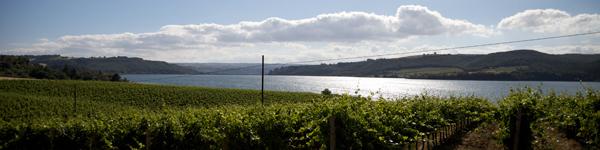 Umbria Wine Tours - agriturismi Orvieto