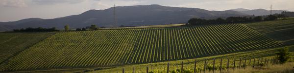 Umbria Wine Tours - cantine - Perugia Trasimeno Altotiberini