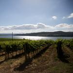 Umbria Wine Tours - Corbara