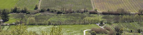 Umbria Wine Tours - Orvieto Aziende Agricole